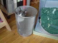 trashcan_kitty